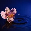 Flower and Water by Riaan Roux