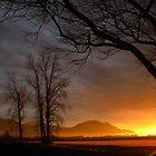 Setting Sun by Tracy Friesen