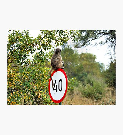 PLEASE TAKE NOTE OF THE SPEED ZONE! - THE CHACHMA BABOON - Papio ursinus Photographic Print