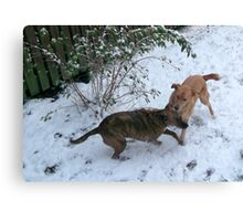 Play Fighting Canvas Print
