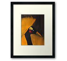 Crowned Crane Framed Print