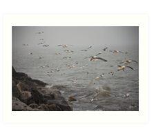 A flock of Seagulls feeding Art Print
