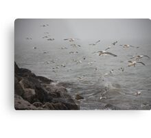 A flock of Seagulls feeding Metal Print