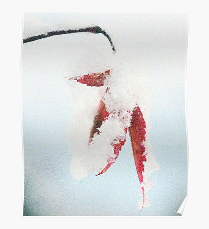 Dressed For Winter Poster