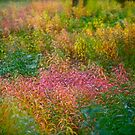 I simply adore the colour pallete . Awwwssss Autumn ! Kiruna . Sweden. 2011 . by Brown Sugar . Views (385) favorited by (6) thx! Featured in Artists Universe. by © Andrzej Goszcz,M.D. Ph.D