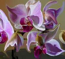 Dancing Orchids by michael10