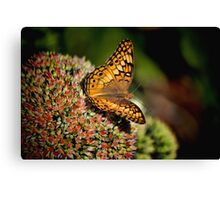On rested wings Canvas Print