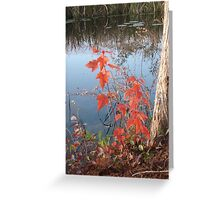 MAPLE SEEDLING, CYPRESS AND CREEK Greeting Card