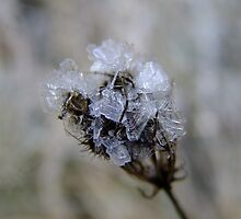 Natures Crystal by Tracy Faught