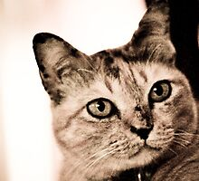Huh! what do you said mommy? meow...Got Featured Work by Kornrawiee