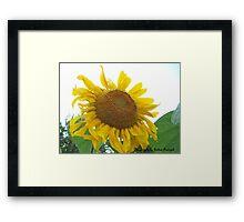 Sunflower *4* Photography by Joshua Fronczak Framed Print
