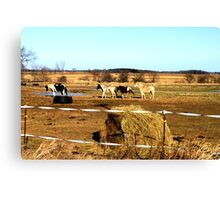 Wisconsin Farm animals Canvas Print
