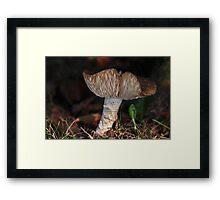 Sombrero - Mushroom Framed Print