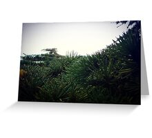 Pine needle Greeting Card