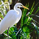 White Egret by Diego Re