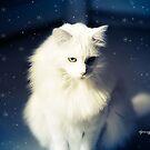 White Christmas by ibjennyjenny