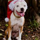 Dear Santa I've Been Good....Most Of The Time!  by Zdogs