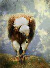 Vulture by Carol Bleasdale