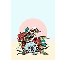 Laughing bird Photographic Print