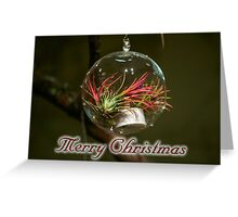 Airplant Christmas Ornament Greeting Card