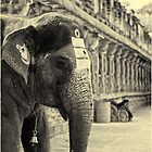 The holy elephant by Neha Singh