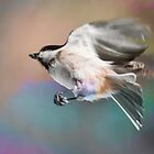 Chickadee Seed by Nazareth