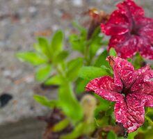 Red, moist flowers. by Janne Keinänen