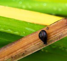 Snaily. by Janne Keinänen