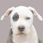 Pretty Pit Bull Puppies - York Kennels - by Ginny York by Ginny York