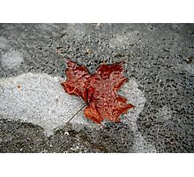 Maple Leaf under Ice Photographic Print