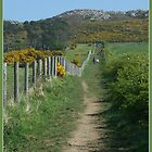 Bray Head Walk by dOlier