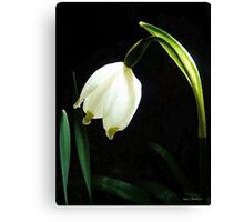 Snowflake Flower Canvas Print