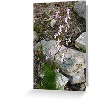 Trigger flower plant Greeting Card