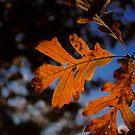 A Piece of Autumn by Murph2010