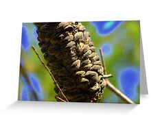 north head manly - australian flora Greeting Card