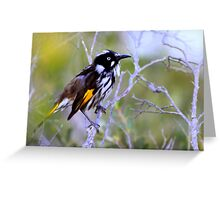 north head manly - little quick honeyeater Greeting Card