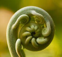 circles of life by Iris Mackenzie