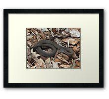 Snake! Framed Print