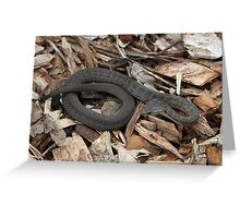 Snake! Greeting Card