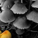 Mushrooms by lorainek