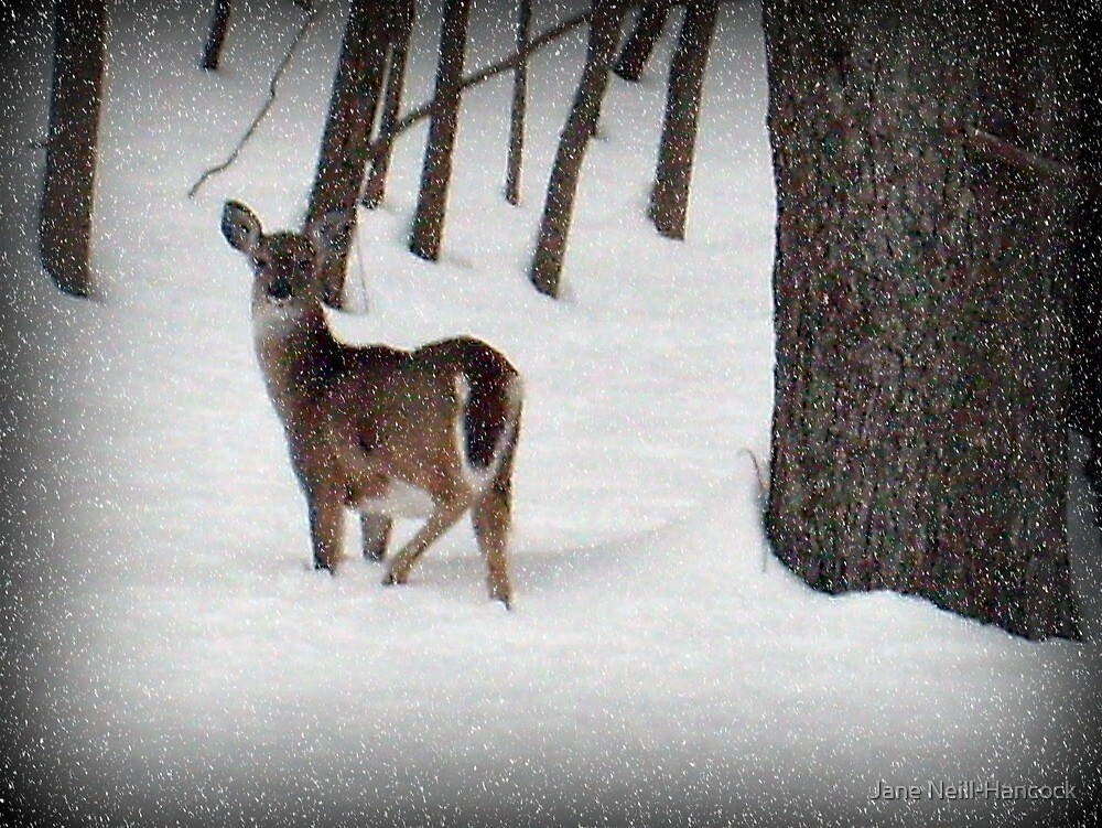 Did You Call Me? (White tailed deer) by Jane Neill-Hancock