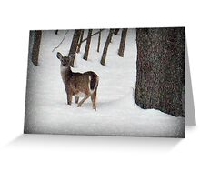 Did You Call Me? (White tailed deer) Greeting Card
