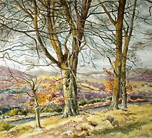 Trees in Glenprosen Angus Scotland by Joyce Grubb