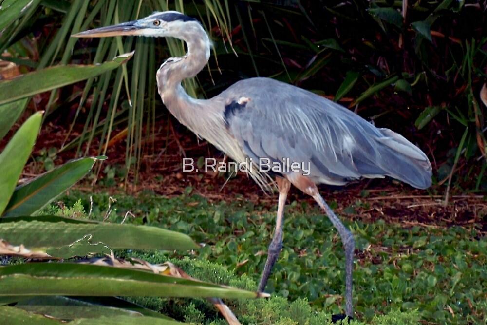 Heron in greenery by ♥⊱ B. Randi Bailey