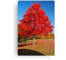 Autumn in Connecticut Canvas Print
