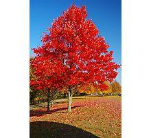 Autumn in Connecticut Photographic Print