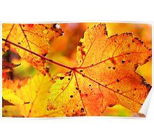 Veins of Autumn Poster