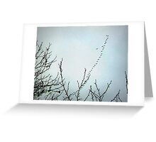 Winter is Coming I - Trees, Canada Geese Migration Greeting Card