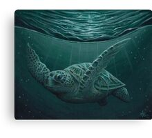 """Eclipse"" - Green Sea Turtle, Acrylic Canvas Print"