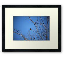 Yellow Birdies  Framed Print